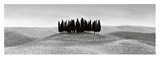 Cypresses in Tuscany Prints by Ilona Wellmann