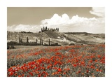 Farmhouse with cypresses and poppies Print by Frank Krahmer