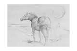 Horses at Coolmore, 1990 Giclee Print by Antonio Ciccone