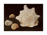 Conch Shell, 1995 Giclee Print by Peter Davidson