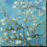 Almond Branches in Bloom, San Remy, c.1890 Stretched Canvas Print by Vincent van Gogh