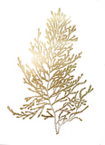 Gold Foil Algae IV Prints by Jennifer Goldberger