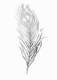 Silver Foil Feather II Kunstdrucke von  Vision Studio