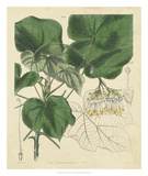 Curtis Leaves & Blooms I Giclee Print by  Curtis
