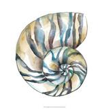 Chariklia Zarris - Aquarelle Shells II Digitálně vytištěná reprodukce