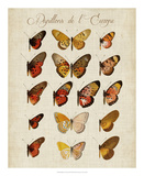 Papillons de L'Europe III Giclee Print by Vision Studio