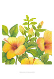 Watercolor Hibiscus I Posters by Tim OToole