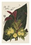 Begonia Varieties II Giclée-tryk af Stroobant