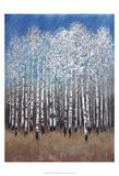 Cobalt Birches II Print by Tim OToole