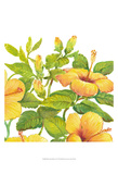Watercolor Hibiscus II Prints by Tim OToole