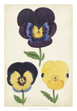 Antique Pansies I Giclee Print