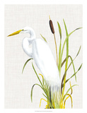 Waterbirds & Cattails IV Giclee Print by Naomi McCavitt