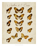 Papillons de L'Europe I Giclee Print by Vision Studio