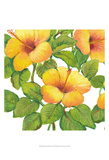 Watercolor Hibiscus III Posters by Tim OToole