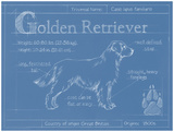 Blueprint Golden Retriever Prints by Ethan Harper
