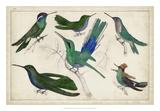 Hummingbird Gathering II Giclee Print