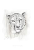 Big Cat Study I Prints by Grace Popp