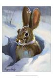 Snow Bunny Prints by Carolyne Hawley