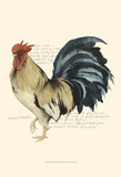 Rooster's Crow II Prints by Grace Popp
