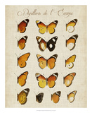 Papillons de L'Europe II Giclee Print by Vision Studio