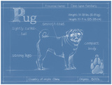 Blueprint Pug Prints by Ethan Harper