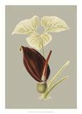 Botanical Cabinet VIII Giclee-vedos tekijänä E. Cooke