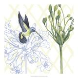 Hummingbird Dance III Prints by Grace Popp