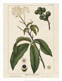 Round fruited Honeyberry Giclee Print by John Silva