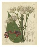 Curtis Leaves & Blooms II Giclee Print by  Curtis
