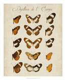Papillons de L'Europe IV Giclee Print by Vision Studio