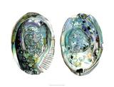 Abalone Shells I Giclée-tryk af Naomi McCavitt