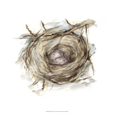 Bird Nest Study IV Giclee Print by Ethan Harper