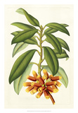 Tropical Rhododendron I Giclee Print by Horto Van Houtteano