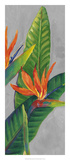 Bird of Paradise Triptych III Print by Tim OToole