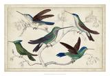Hummingbird Gathering I Giclee Print
