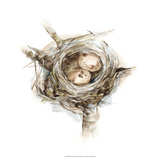 Bird Nest Study I Giclee Print by Ethan Harper