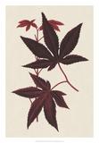 Japanese Maple Leaves I Reproduction procédé giclée par  Stroobant
