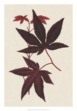 Japanese Maple Leaves I Giclee Print by  Stroobant