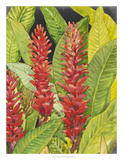 Red Tropical Flowers II Giclee Print by Tim OToole