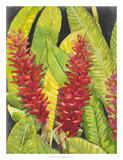 Red Tropical Flowers I Giclee Print by Tim OToole
