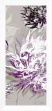 Purple Allure III Framed Canvas Print by Sally Scaffardi