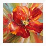 Island Blossom I Framed Canvas Print by  Nan