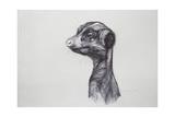 Meerkat, 2016 Giclee Print by Lou Gibbs
