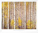 Aspen Grove, Colorado Framed Canvas Print by Christopher Burkett