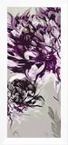 Purple Allure I Framed Canvas Print by Sally Scaffardi
