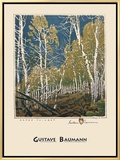 Aspen Thicket Framed Canvas Print by Gustave Baumann