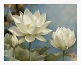 Lotus I Framed Canvas Print by Igor Levashov
