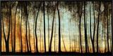 Golden Forest Framed Canvas Print by Graham Reynolds