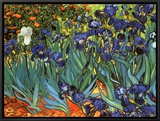 Irises, Saint-Remy, c.1889 Framed Canvas Print by Vincent van Gogh