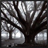 Oak Grove, Winter Framed Canvas Print by William Guion